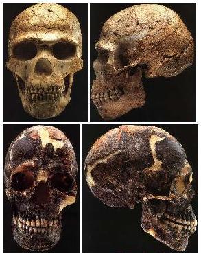 ArchaicSkullsIsrael